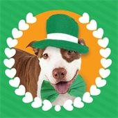 St. Pitty's Day